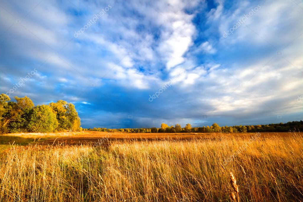 Rural landscape with wheat field on sunset — Stock Photo #3133034