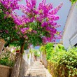 Stock Photo: Street of Herceg Novi