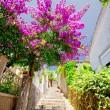 Street of Herceg Novi — Stock Photo