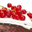 Royalty-Free Stock Photo: Red currant isolated