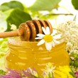 Stock Photo: Miscellaneous herbs honey