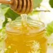 Stock Photo: Linden honey