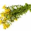 Herbal medicine Hypericum isolated — Stock Photo