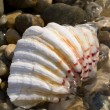 Sea shell on beach — Stock Photo