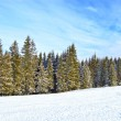Winter forest — Stock Photo