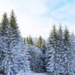 Winter forest — Stock Photo #4303868