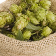 Golden hops on white — Stock Photo