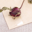 Dry rose on letter — Stock Photo