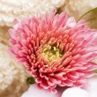Soap and chrysanthemum — Foto de stock #4304860