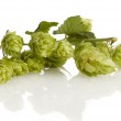 Golden hops on white — Stock Photo #4309522