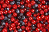 Red currant and bilberry background — Stock Photo