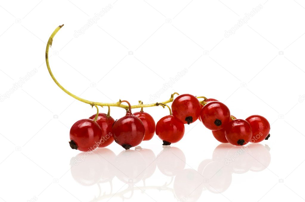 Red currant isolated  Stock Photo #4304497