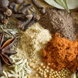 Spice: pepper anisetree cumin fennel cloves — 图库照片