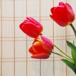 Three red tulips - Stock Photo