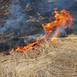 Forest conflagration - Stock Photo