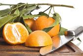 Mandarines isolated — Stock Photo