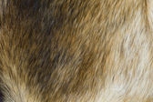 Fur background — Stock Photo