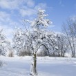 Winter tree - Photo