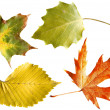Autumn leaves isolated - Stock Photo