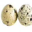 Quail eggs - Stockfoto