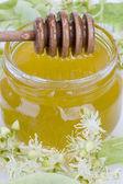 Linden honey — Stock Photo