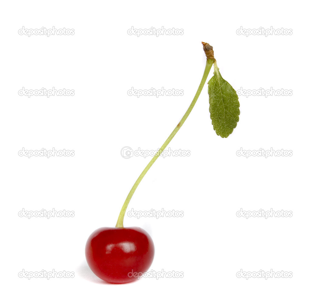 Cherry isolated — Foto Stock #4321315