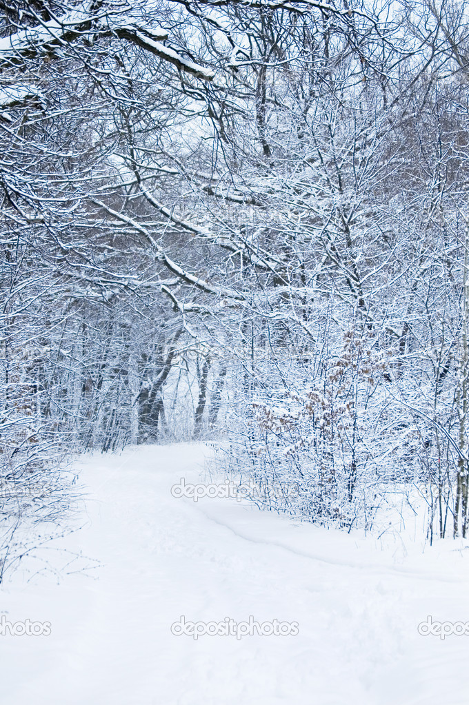 Winter forest — Stock Photo #4333193