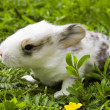 Rabbit child - Stock Photo