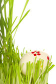 Easter egg in green grass — Stock Photo
