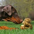 Dog and teddy bear — Stock Photo #3010363