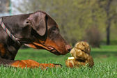 Dog and teddy bear — Stock Photo