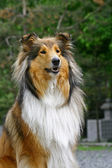 Dogs portrate — Stockfoto