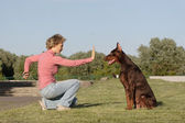 Working with dog — Stock Photo