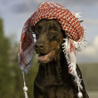 Dog in hat - Stockfoto