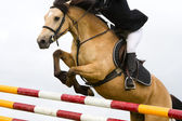 Horse with jokey jumping over the fence, detail — Stock Photo
