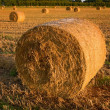 Bales of straw close-up in the field — Stock Photo #3675619