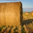 Bales of straw close-up in the field — Stock Photo