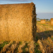 Bales of straw close-up in the field — Stock Photo #3675631