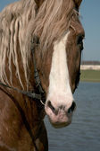 Portrait of a favourite horse — Stock Photo