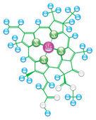 Chlorophyll formula II — Stock Vector