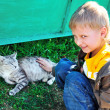Little boy stroking a cat — Stock Photo
