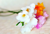 Fresh spring freesias in soft focus — Stockfoto