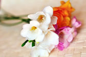 Sweet spring freesias in the soft focus — Stock Photo