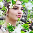 In the apple blossom — Stock Photo
