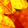 Orange and red leaves like flame — Stock Photo #2730742