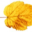 Yellow autumn leaf isolated on a white — Stock Photo
