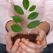 Green plant in hands — Stock Photo #3975433