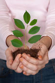 Groene plant in handen — Stockfoto
