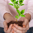 Green plant in hands — Stock Photo