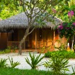 Bungalow in jungles — Stock Photo